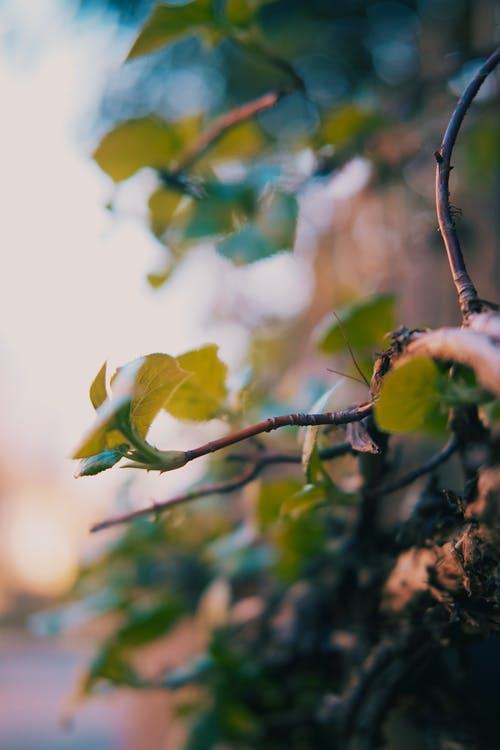 Free stock photo of beautiful nature, leaf, tree