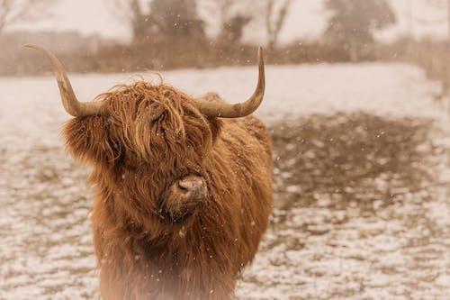 Δωρεάν στοκ φωτογραφιών με αγελάδα, άγρια φύση, αγρόκτημα