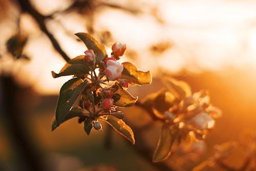 Imagine de stoc gratuită din apus, arbore, creangă, culori