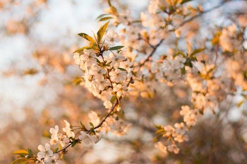 Bahçe, bitki örtüsü, bulanıklık, büyüme içeren Ücretsiz stok fotoğraf