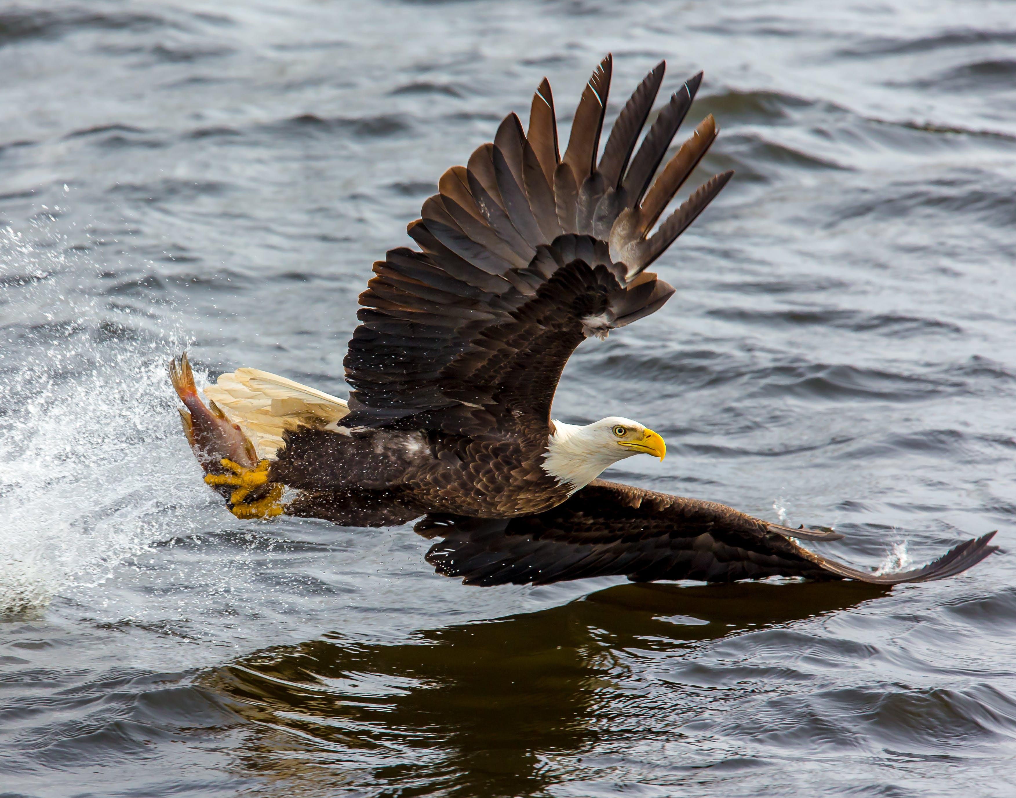Free stock photo of flight, nature, bird, water