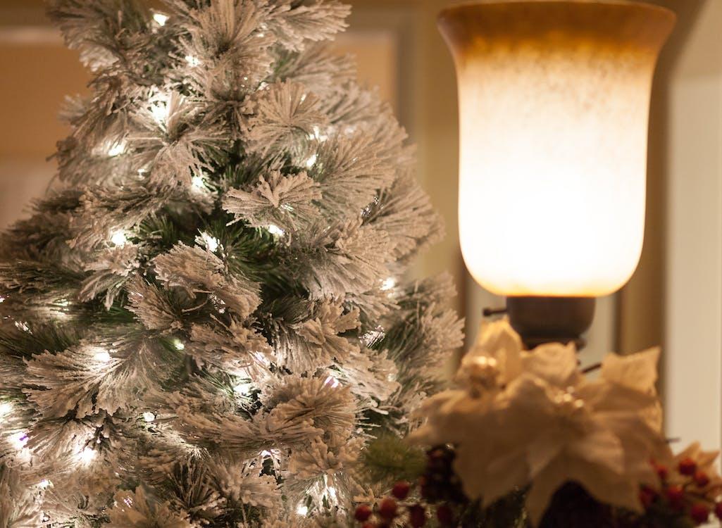 Free stock photo of Holiday Scene with Light, holiday tree, tree lights