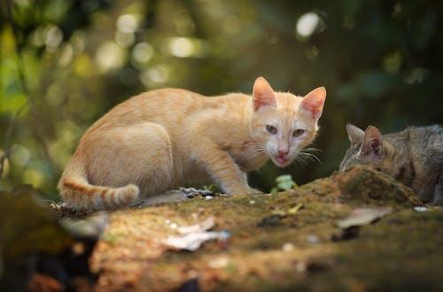 Orange Tabby Cat on Brown Rock