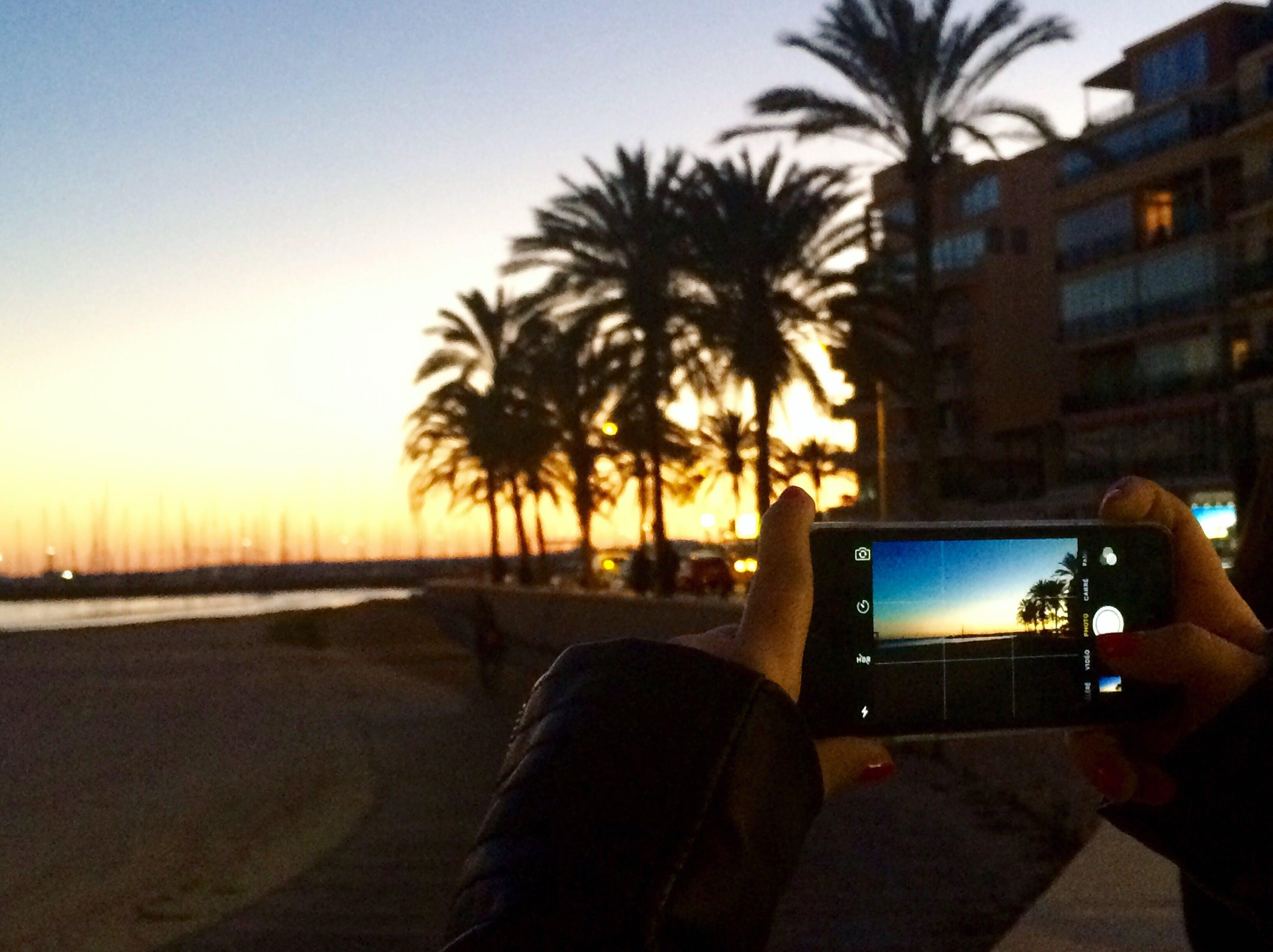 Free stock photo of palma, sunset