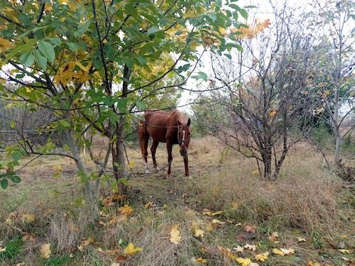 Free stock photo of autumn, horse