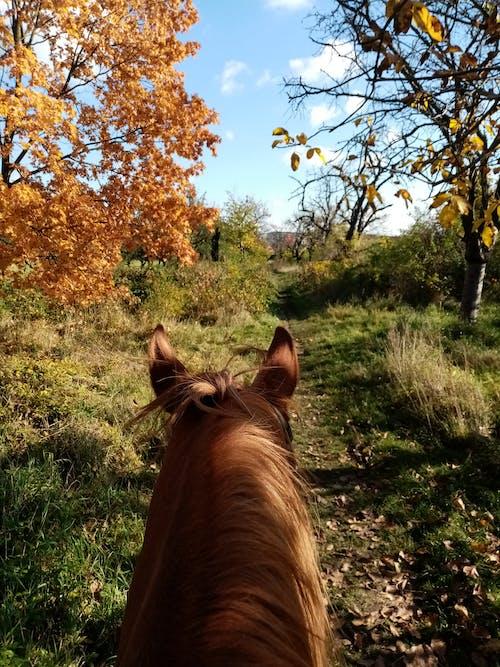Free stock photo of autumn, horse, horseback riding