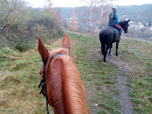 Free stock photo of horse, horseback riding