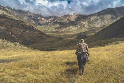 乾草地, 乾草田, 人, 動物 的 免费素材照片