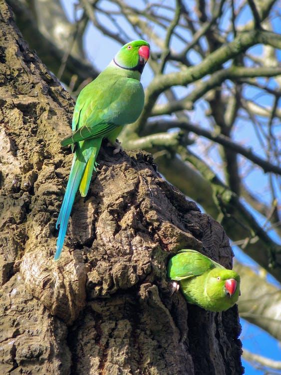 Ảnh lưu trữ miễn phí về cây, chim, con vật