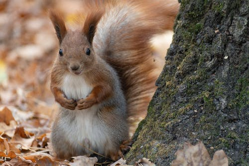 動物, 原本, 可愛 的 免費圖庫相片