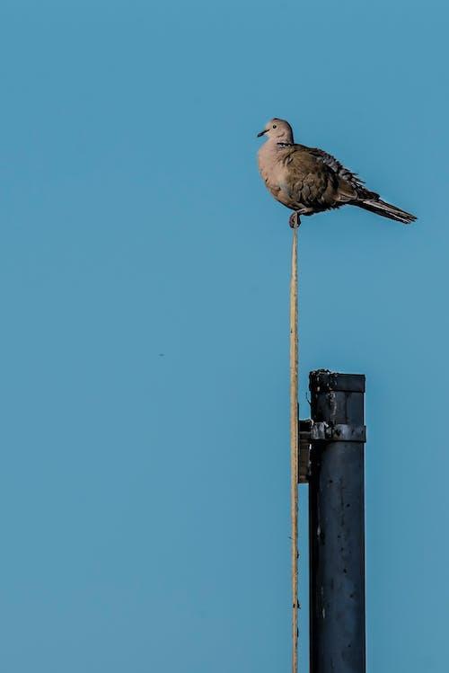 Free stock photo of alone, bird, blue