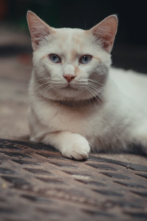 White Cat on Brown Wooden Surface