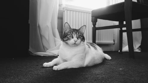 Fotos de stock gratuitas de amante de los gatos, amor, animal