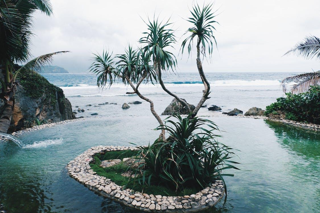 Tanaman Daun Hijau Dekat Garis Pantai