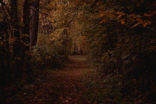 Free stock photo of autumn, dark, enchanted