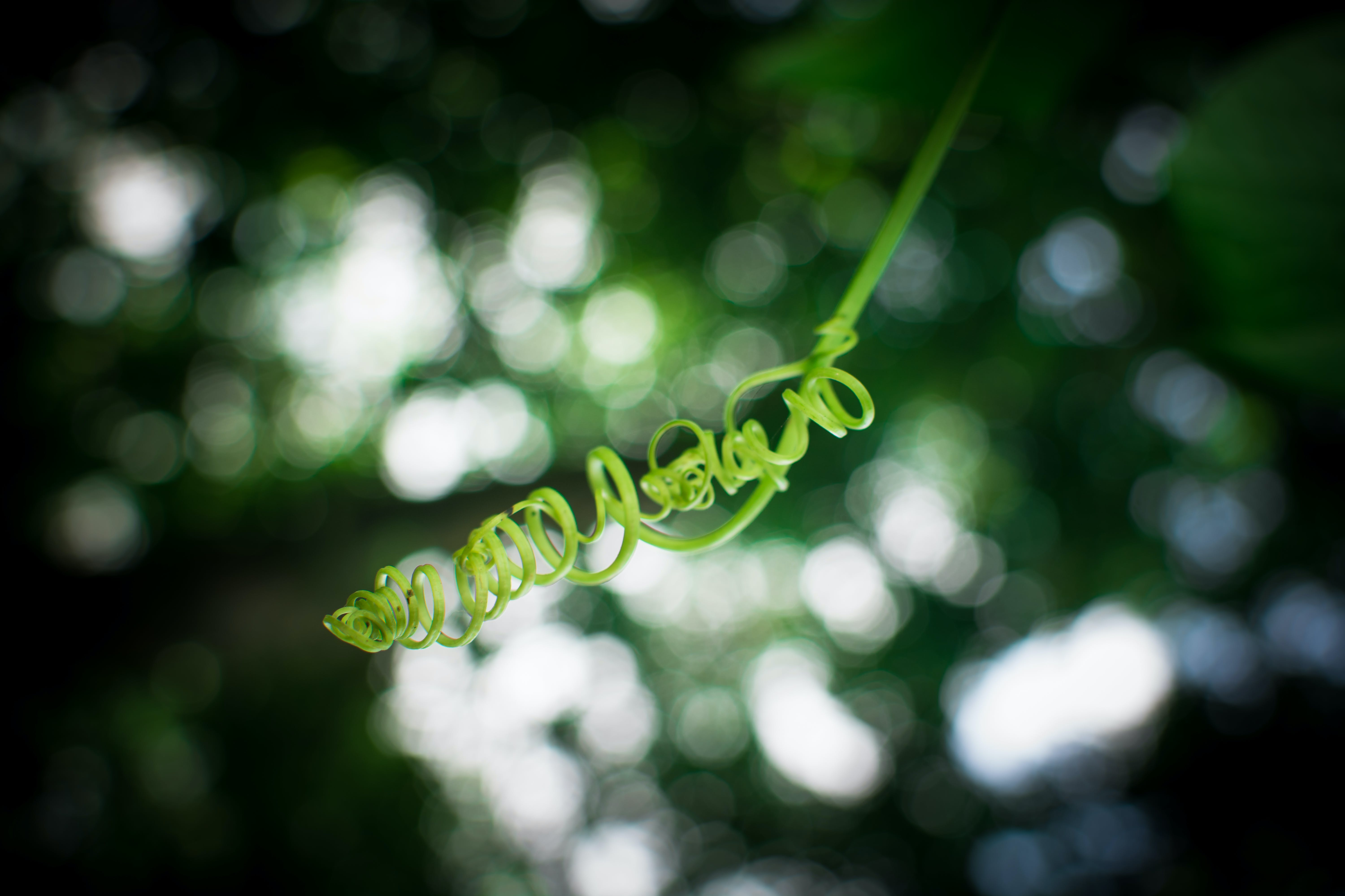 Shallow Focus Photography of Green Plant