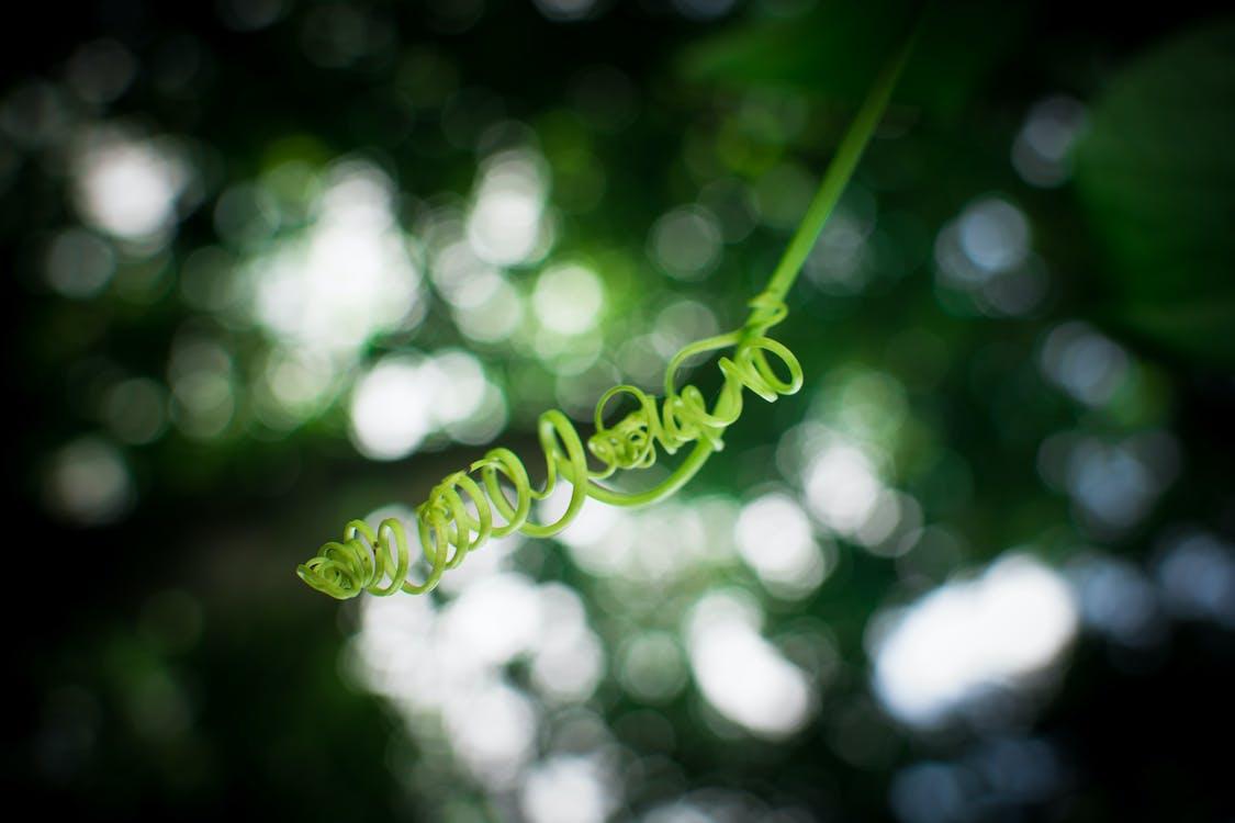 albero, ambiente, arricciare