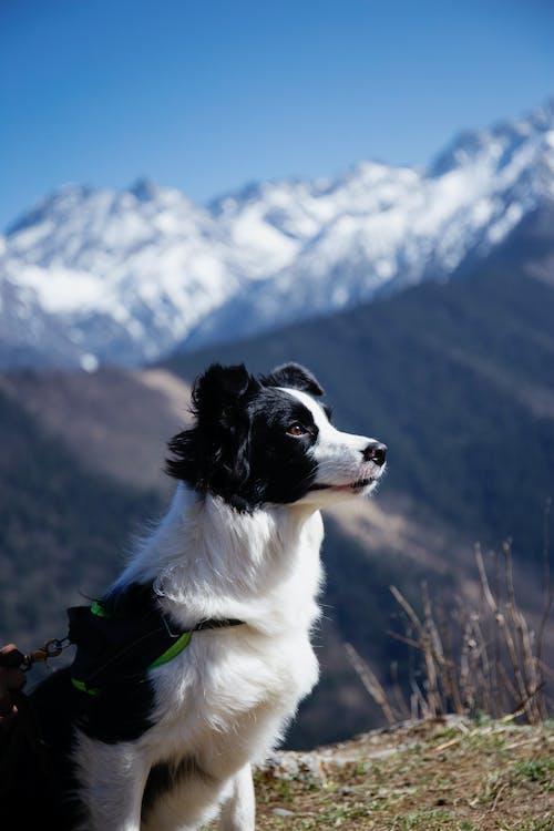 Fotos de stock gratuitas de al aire libre, animal domestico, animal peludo
