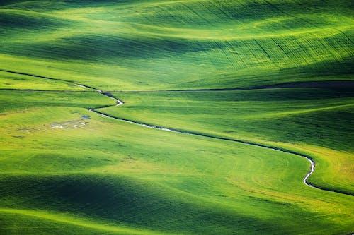 Foto profissional grátis de área, campina, campo de golfe, cênico