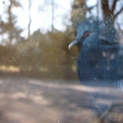 Free stock photo of bird, zoo