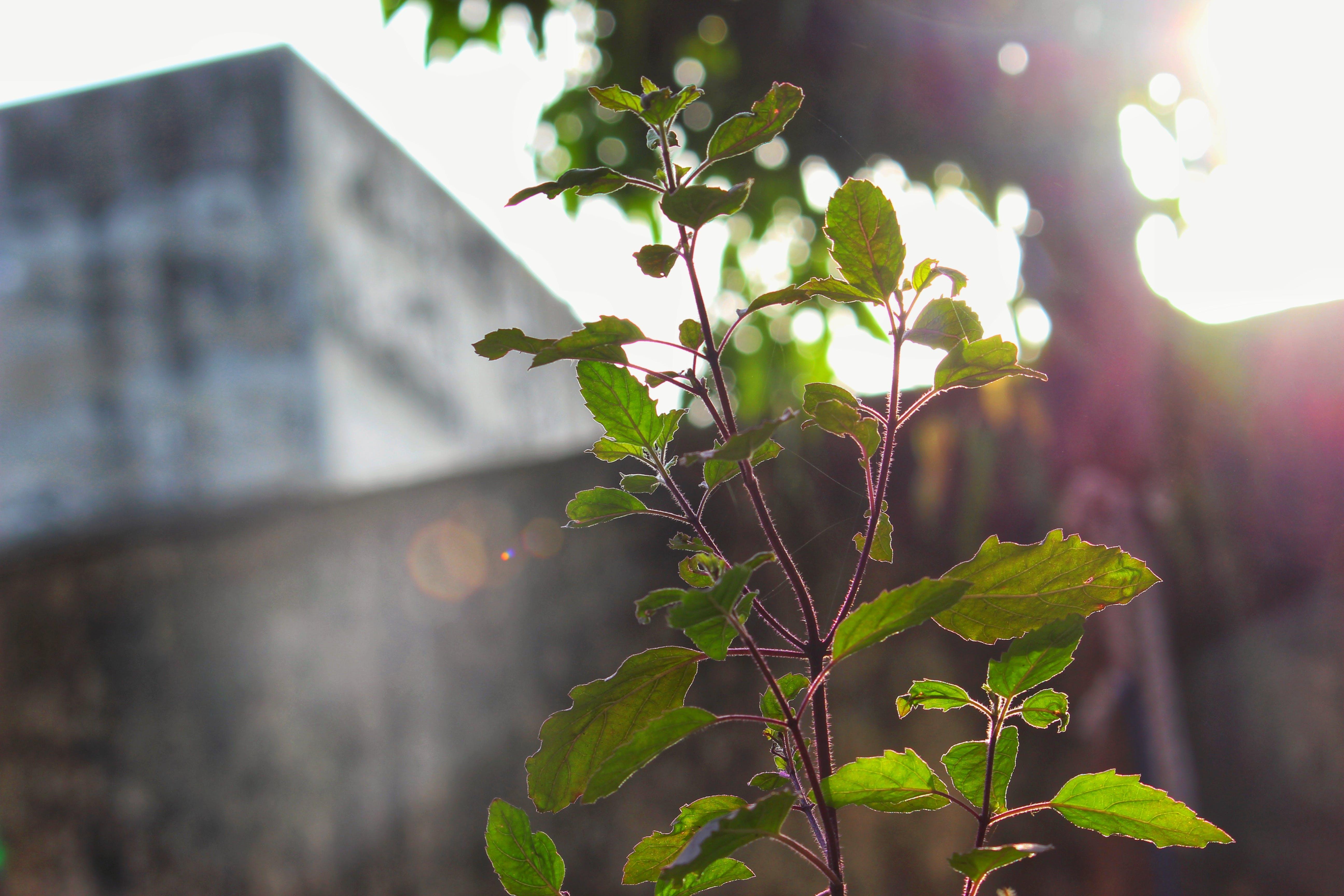 Free stock photo of greenery, morning