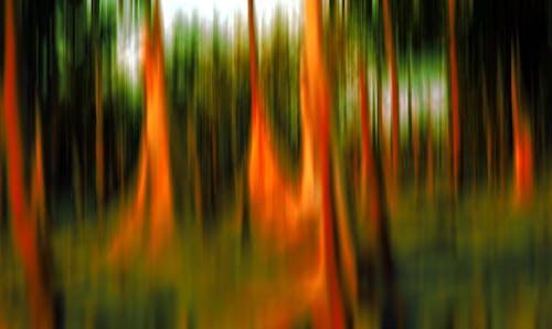 Free stock photo of wetland plants