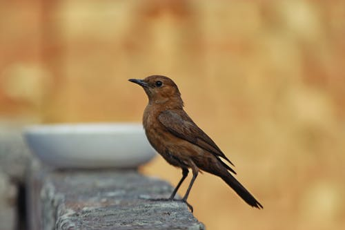 Free stock photo of lahore, pakistan, sparrow
