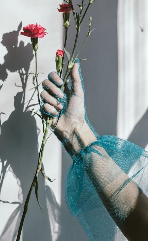꽃, 남자, 로맨스의 무료 스톡 사진