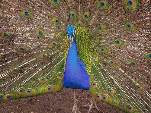 Fotos de stock gratuitas de animal, bonito, colores