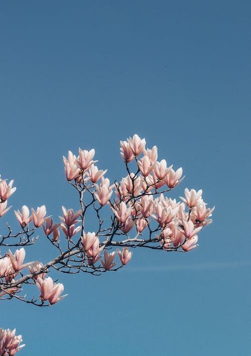 Pink Flower Under Blue Sky