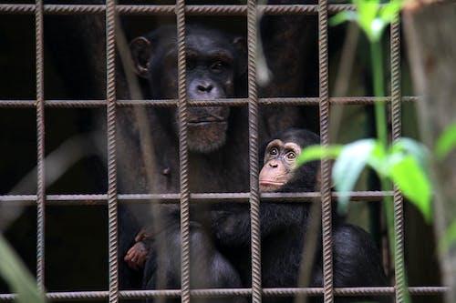 Foto profissional grátis de África, animais, animais em gaiolas