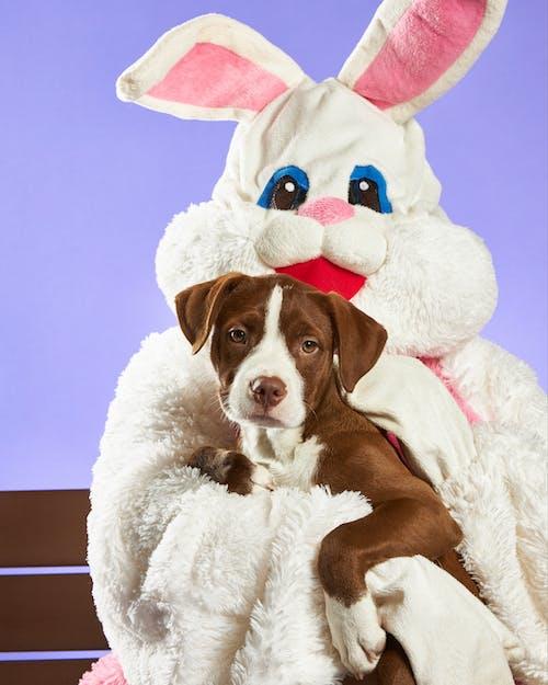 Free stock photo of adorable, animal, bunny