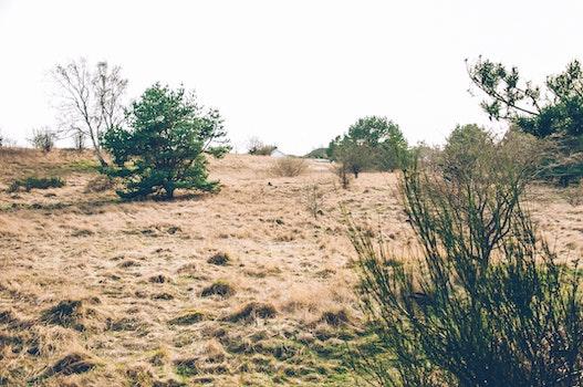 Bushes in Desert Under Clear Sky