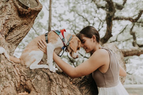 Woman in Brown Tank Top Kissing White and Brown Short Coated Dog