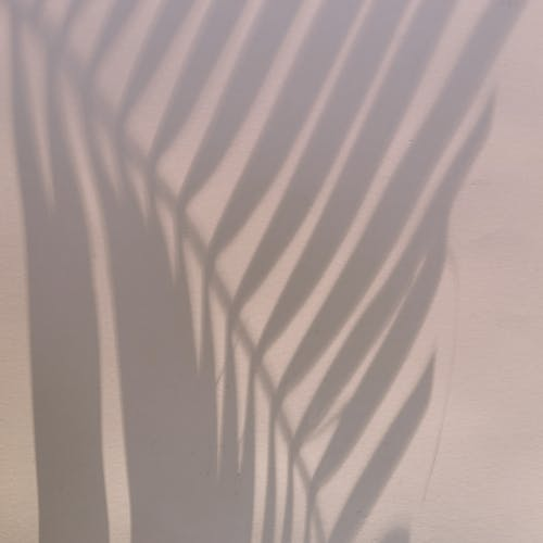 Shadow in shape of palm leaf located on light pink wall on summer day