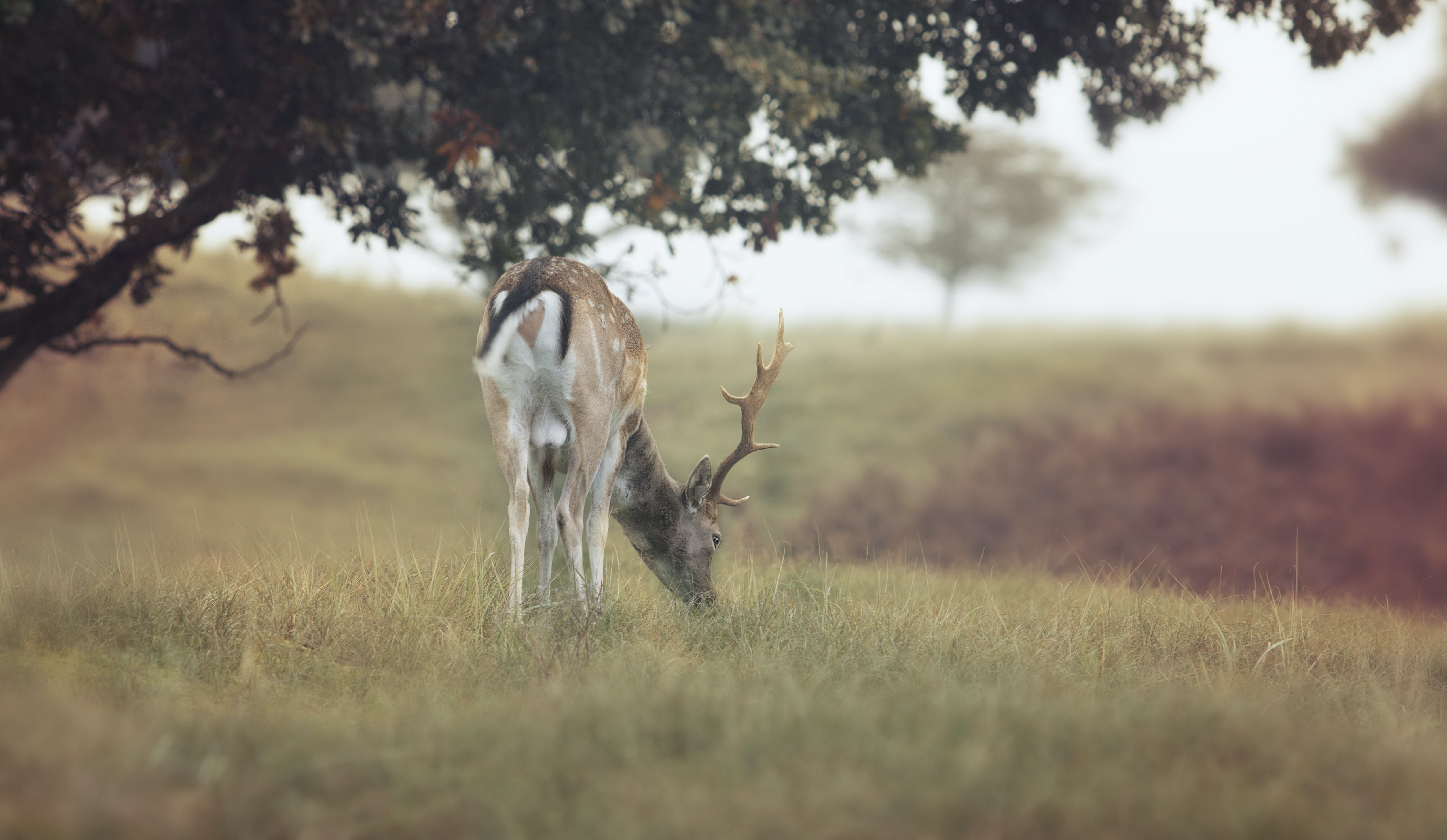 Close-up Photography of Deer