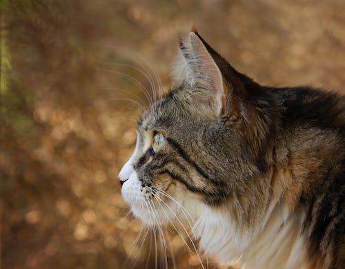 Immagine gratuita di alla ricerca, animale, baffi, cacciatore