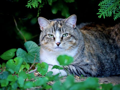 Brown Tabby Cat on Green Plants