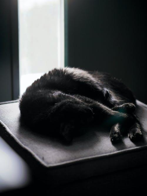 Free stock photo of cat, catnap, kitten