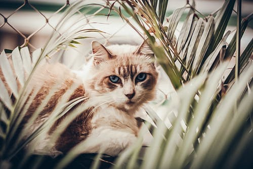Free stock photo of animals, cat lover, cats
