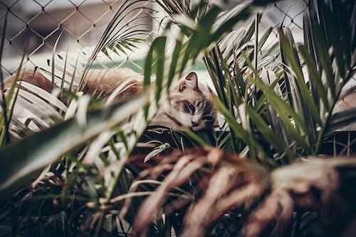Free stock photo of animals, cats, greenery