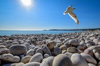 Seagull Soaring on Top of Pebble Field at Beach