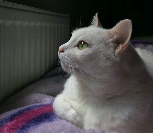 Δωρεάν στοκ φωτογραφιών με γάτες