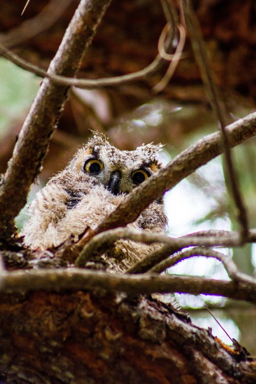 Free stock photo of avian, bird, owl