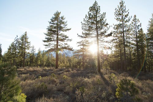 Foto profissional grátis de árvores, floresta, luz do sol, luz solar