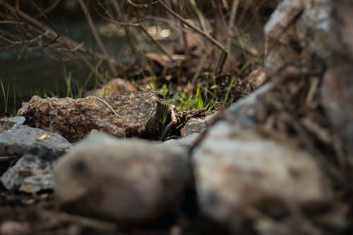 bulanıklık, çekilmiş, çevre, çim içeren Ücretsiz stok fotoğraf