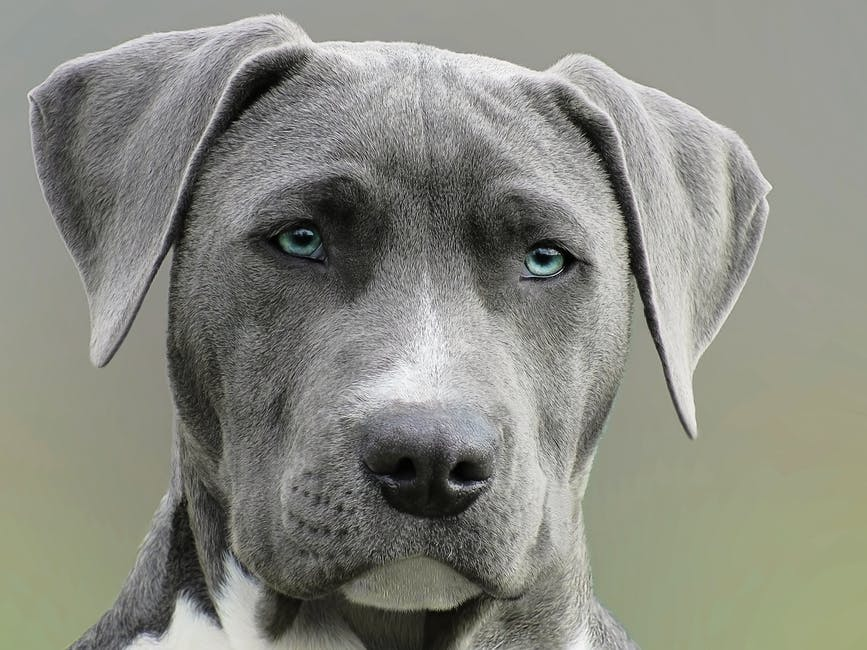 Close Up Photography of Adult Black and White Short Coat Dog