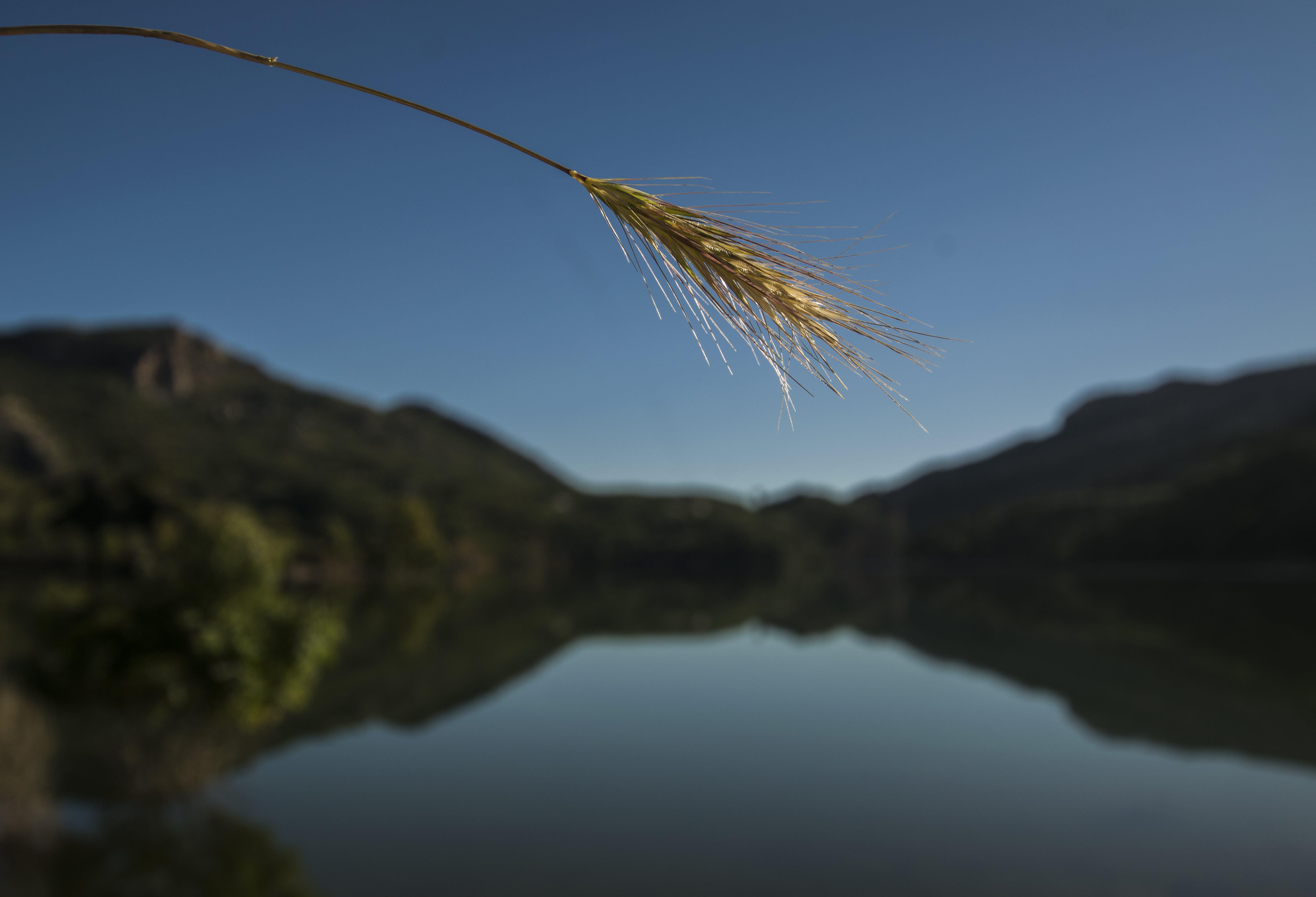 landskab, refleksion, vand