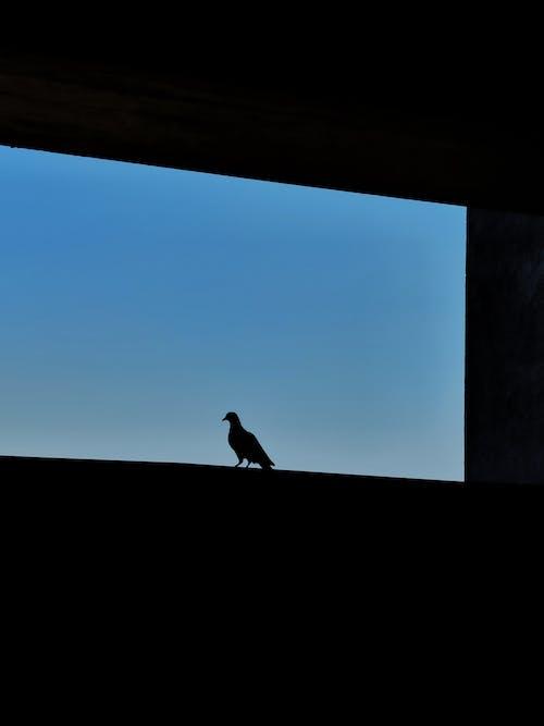 Immagine gratuita di cielo di sera, cornice, incredibile