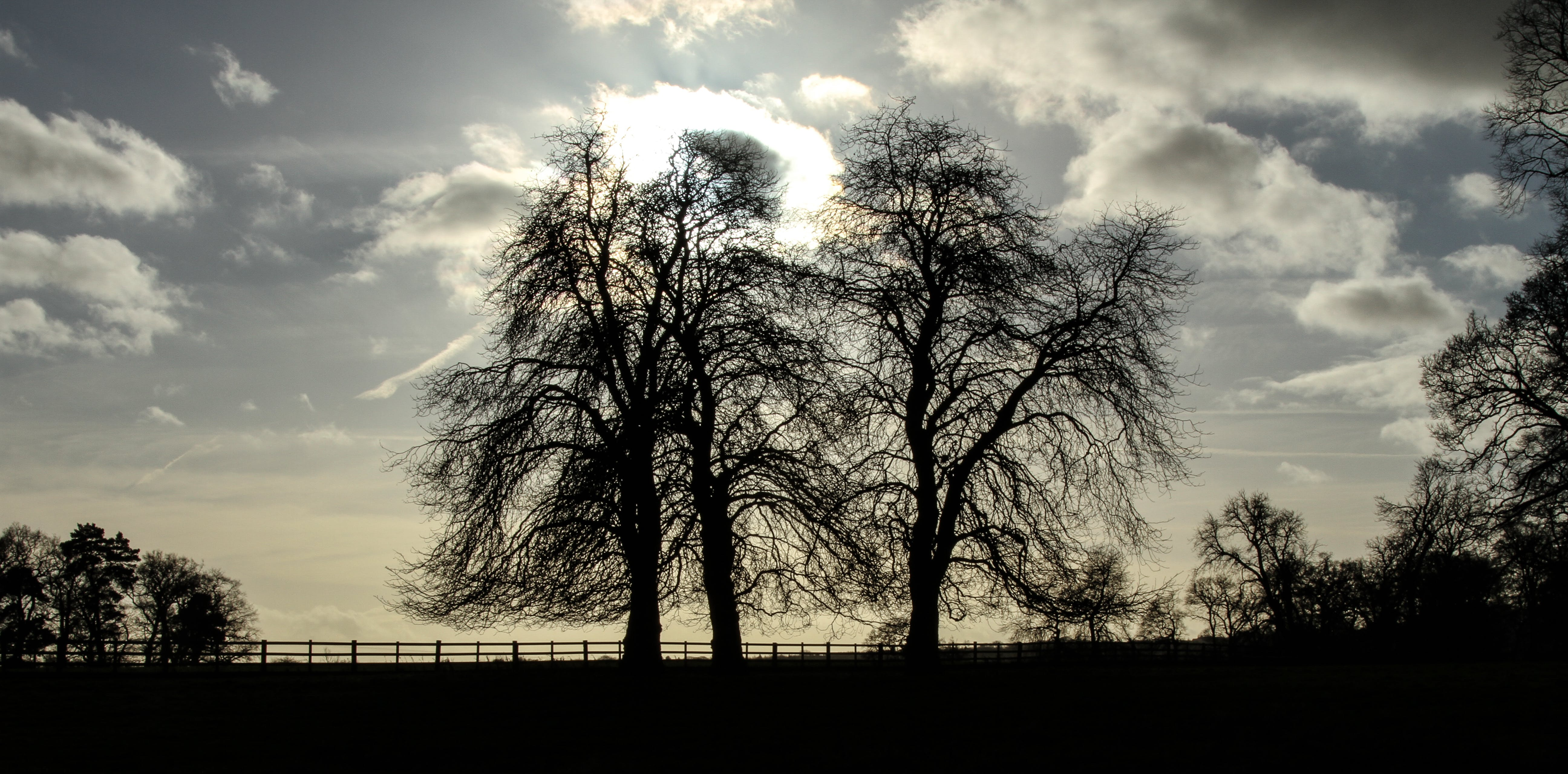Free stock photo of clouds, sunshine, trees, silhouette